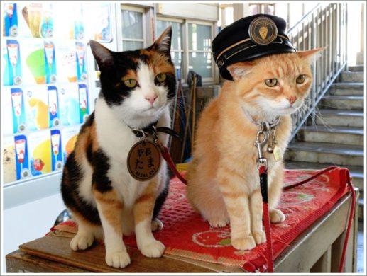 たま駅長とミーコ